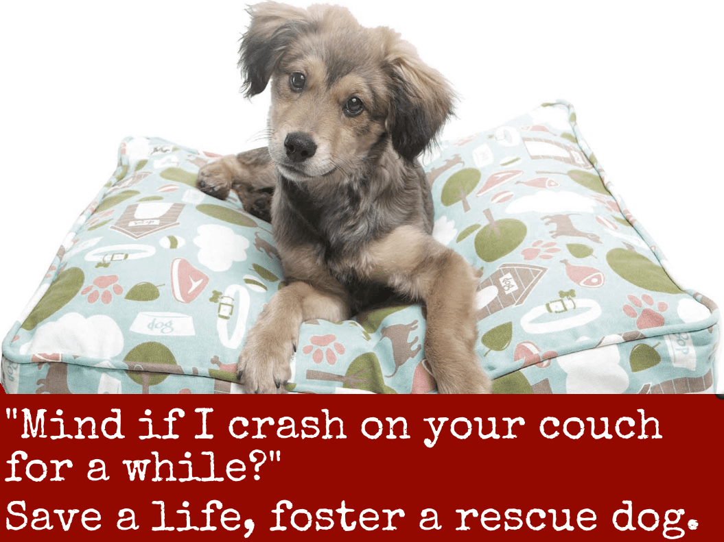 Save one soul animal rescue league homepage