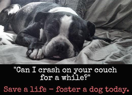 foster a dog, save a life
