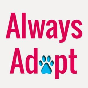 SOS at ALWAYS ADOPT @ Balise Toyota