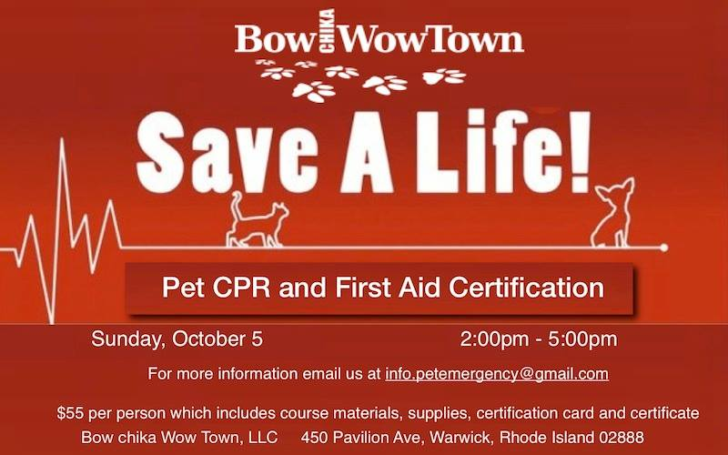 cpr aid pet certification animal save certificate