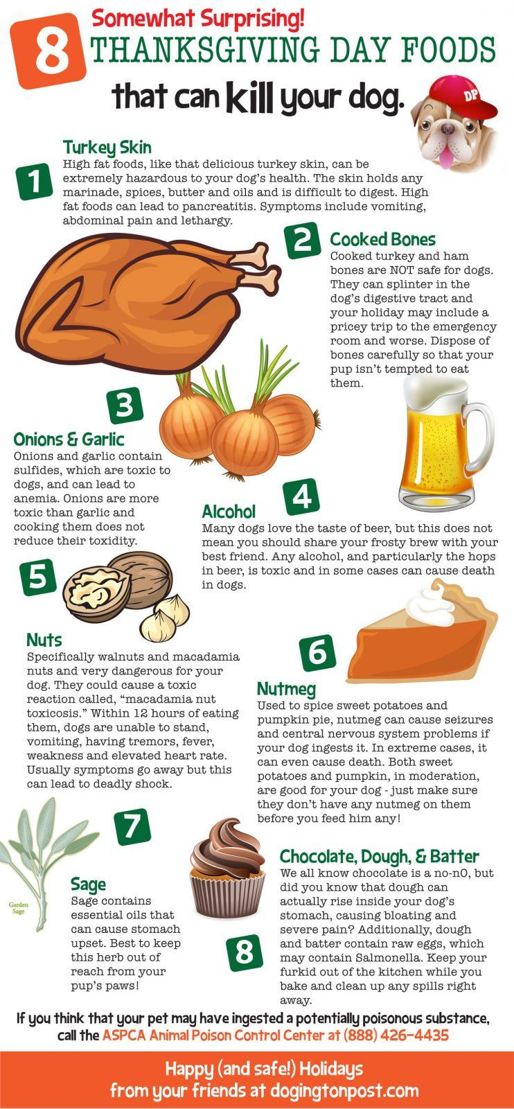 Harmful foods for your dog save one soul animal rescue for What do you eat on thanksgiving list