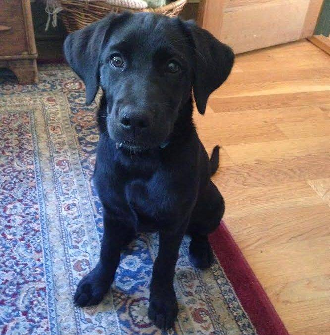 Happy Tail: Ivy (formerly Farrah Findley Saint)