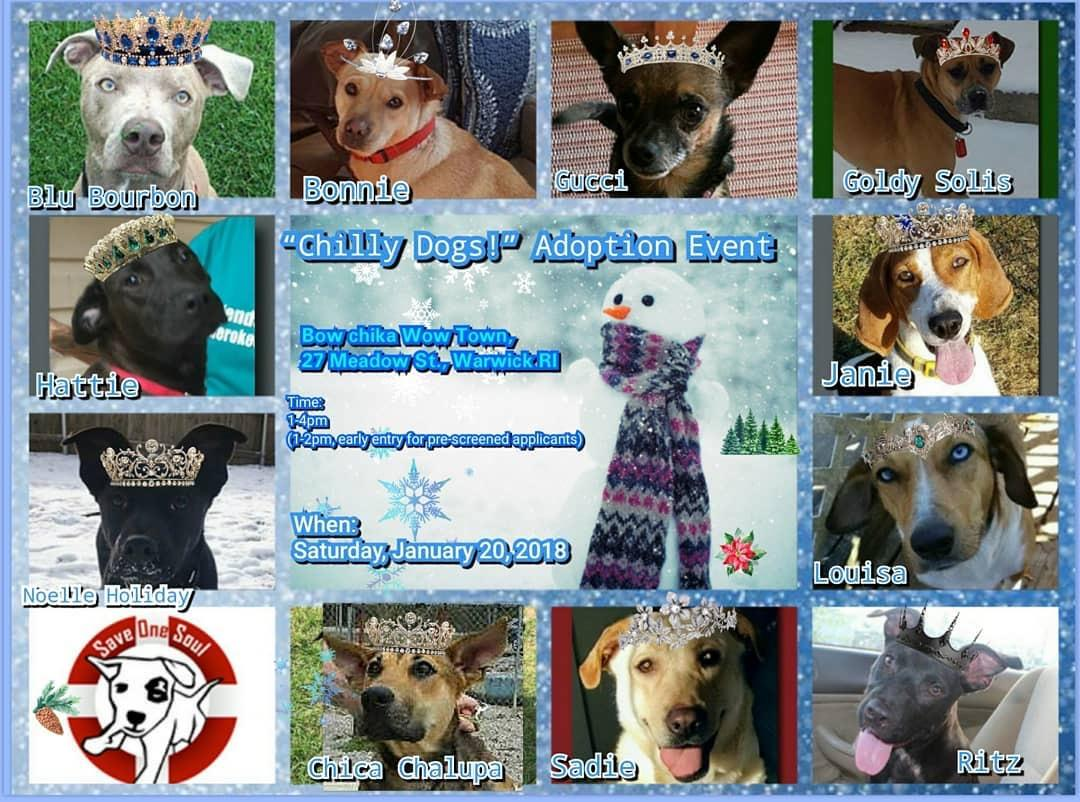 Chilly dogs adoption event save one soul animal rescue league public dogs are welcomed into the event space for meetngreets by appointment only m4hsunfo