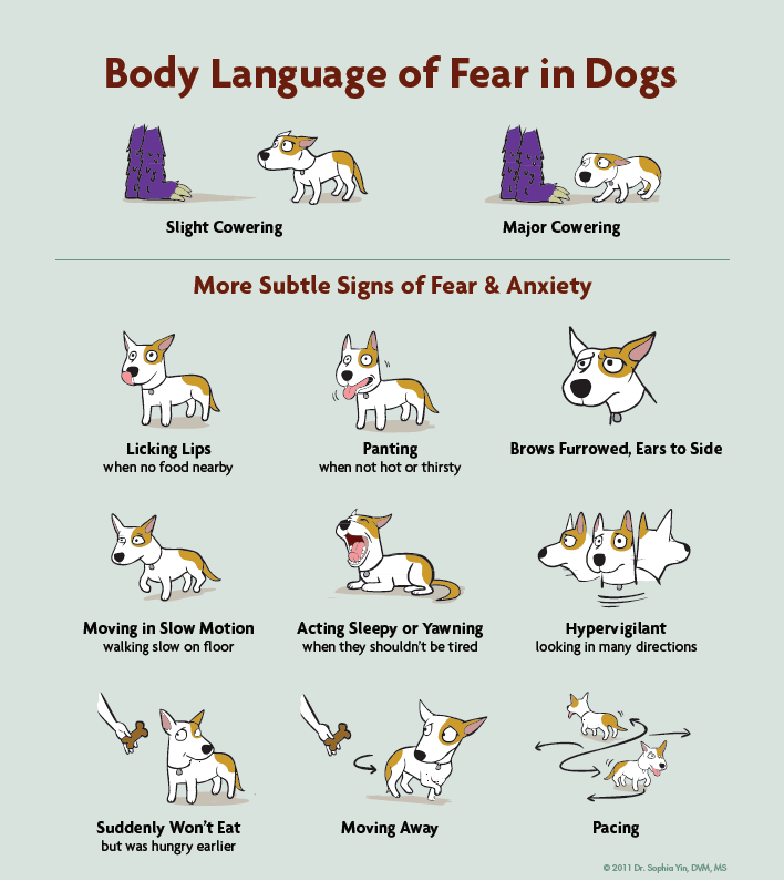 body-language-of-fear-dogs