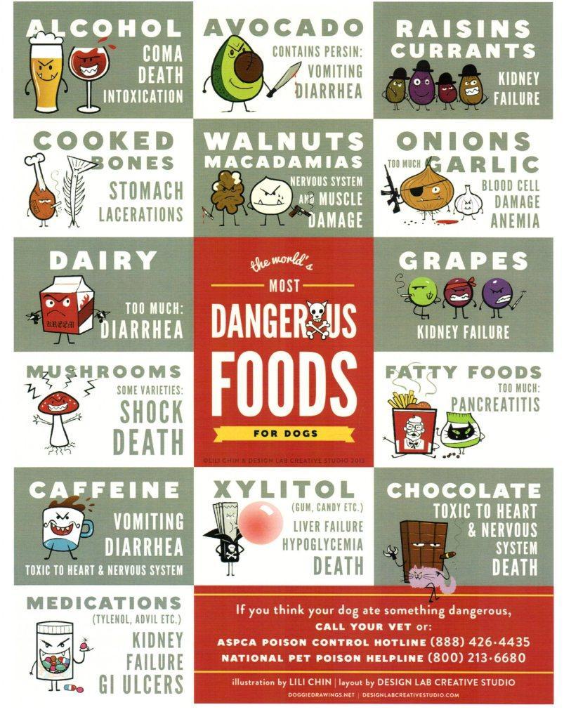 Dangerous-foods-for-dogs_lg