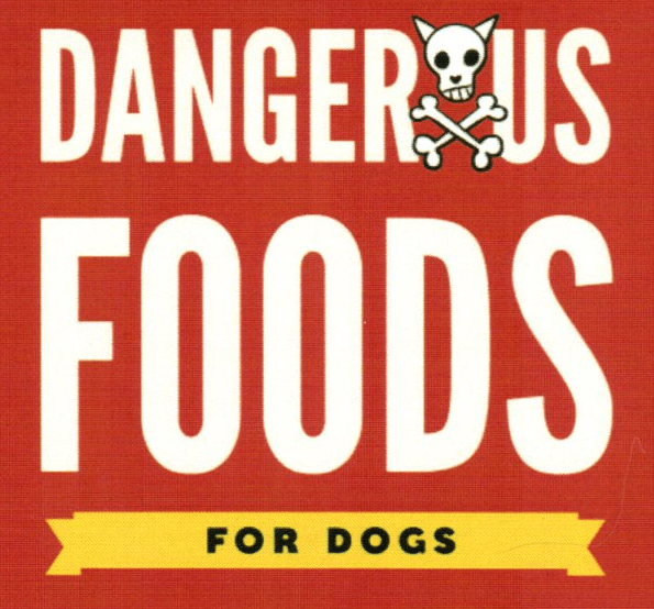 Harmful Foods for Your Dog