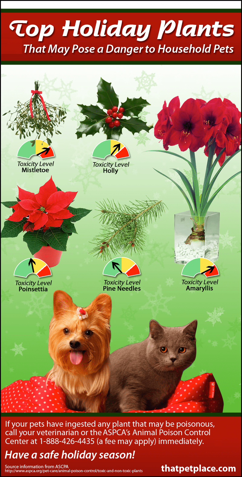 Holiday-Toxic-Plants