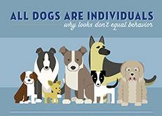 All Dogs Are Individuals