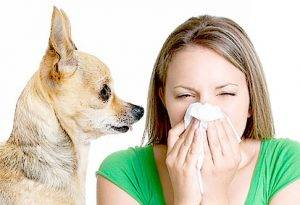 allergic to dogs 1