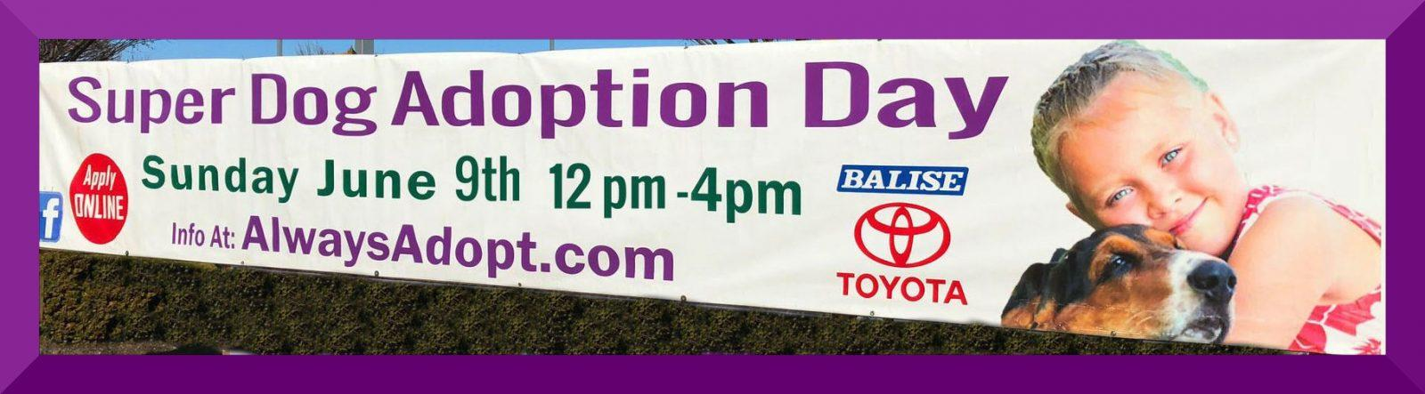 Sos At Super Dog Adoption Day Save One Soul Animal Rescue League
