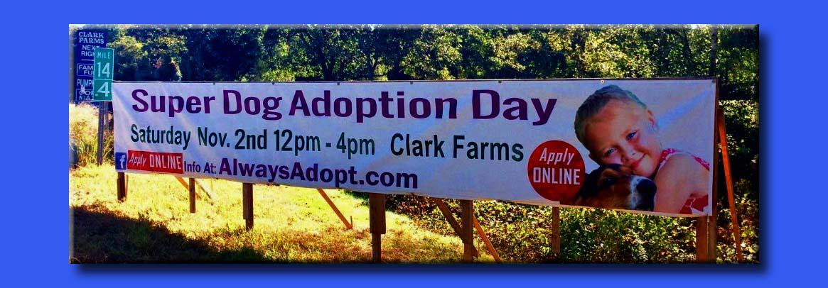 Sos At Always Adopt Super Dog Adoption Day Save One Soul Animal Rescue League