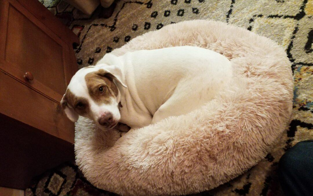 HAPPY TAILS: MOLLY (FORMERLY MOMMA LU)