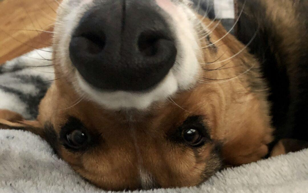 HAPPY TAILS: REESE (FORMERLY JOEY)