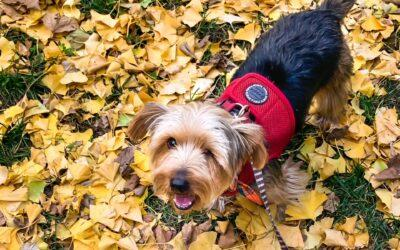 Happy Tails: Olly (FKA: Stanley)