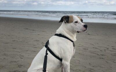 HAPPY TAILS: CHLOE (FKA:PATCHES)